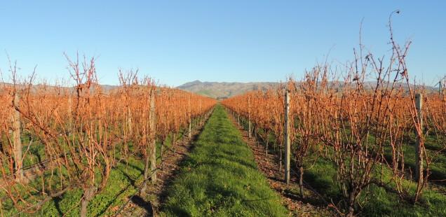 De vins per Marlborough