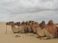 Tour pel desert del Gobi (Dies 5-6)