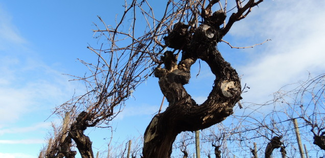 Més vins a Margaret River