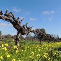 Adelaide i els vins de Barossa