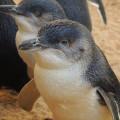 Una de vins i de pingüins